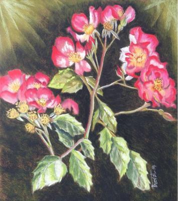 Rose arthus bertrand